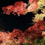 瑠璃光院の紅葉の見頃は?期間限定ライトアップ、混雑状況や周辺情報も!